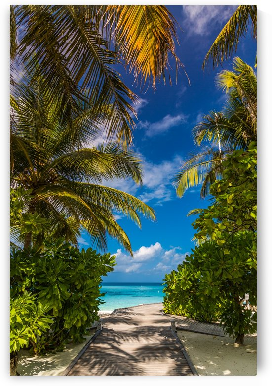 Palm trees low angle view by Levente Bodo