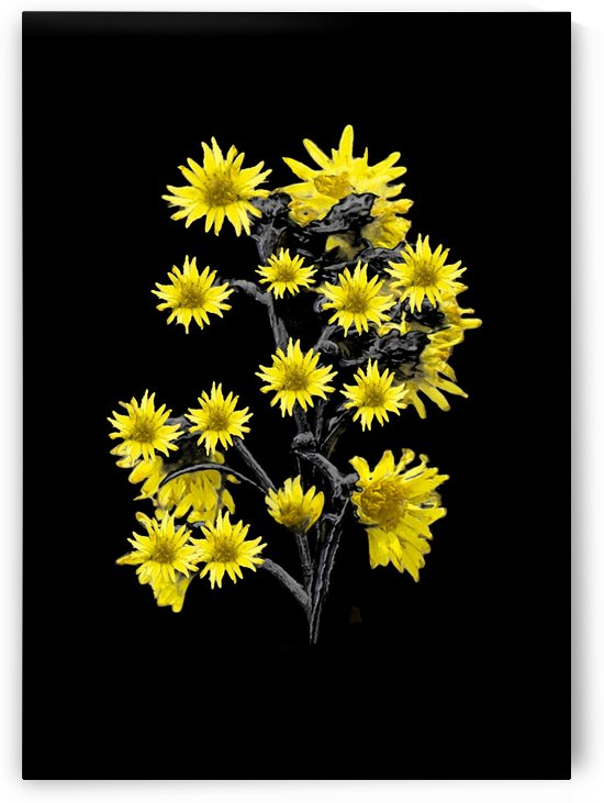 Sunflowers over Black by Daniel Ferreia Leites Ciccarino