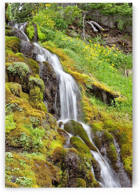 Oregon Waterfall by Melissa McGhee
