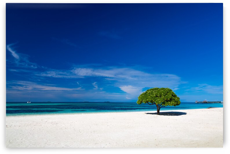 Beautiful tropical beach by Levente Bodo