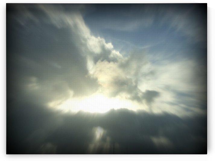 Sunny by Shutterbug