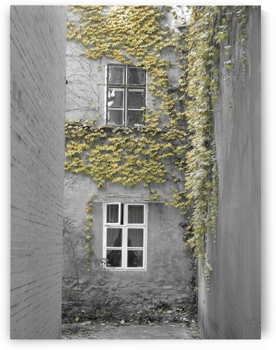 Windows I by B S Jacob