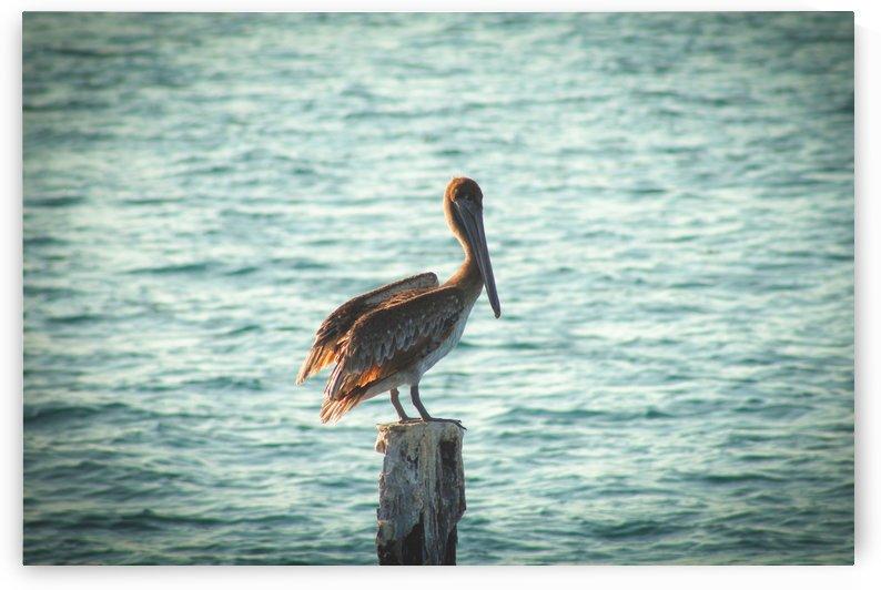 Pelican Perch by Danielle Farrell