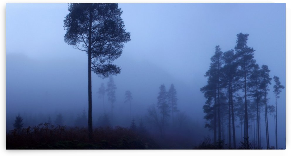 Early Morning Mist by Fergus Maitland