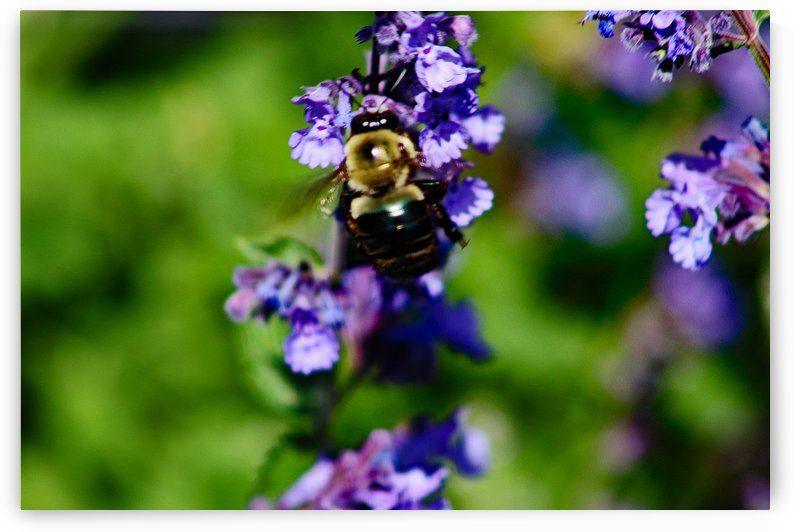 Bumbling Bee 2 by Don  Baker
