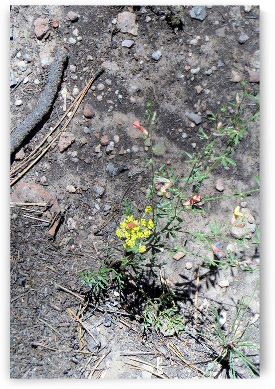Yellow and orange flowers by Debbie-s Photo Korner