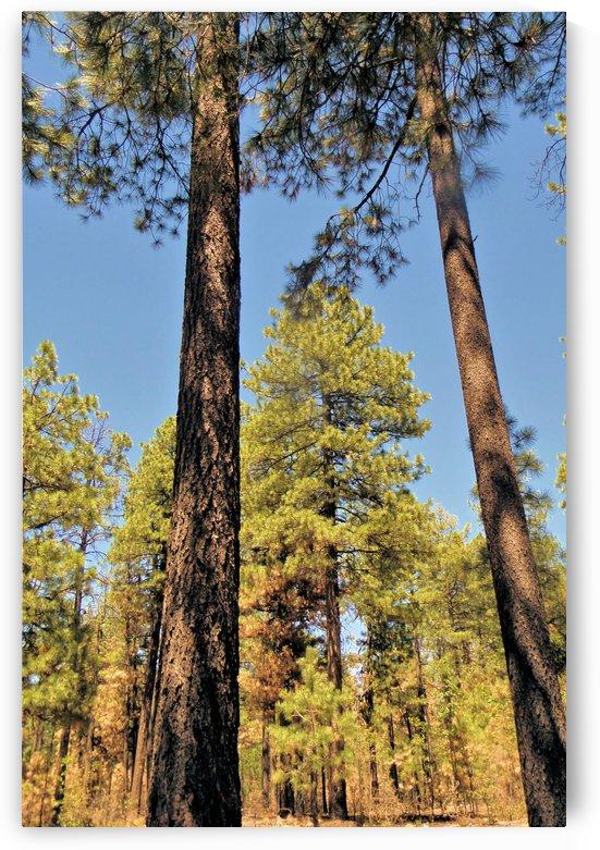 Trees 3 by Debbie-s Photo Korner