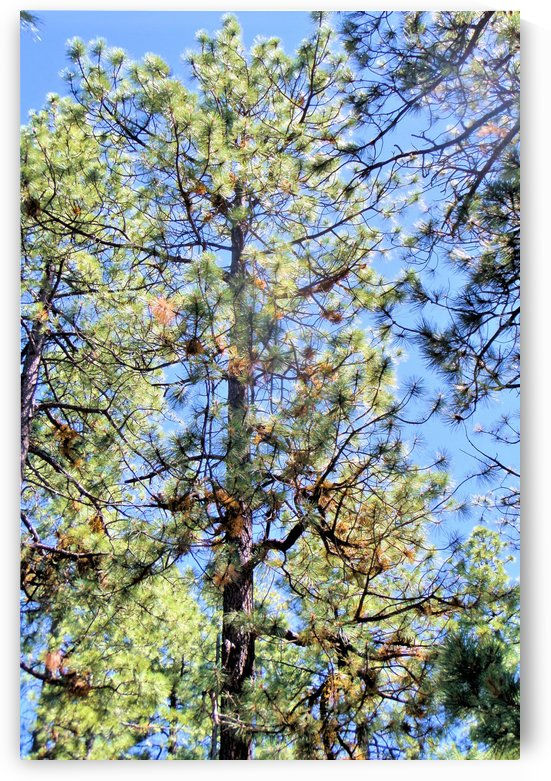 Trees 2 by Debbie-s Photo Korner