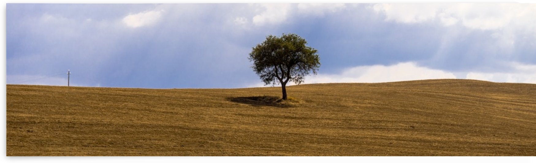 Tuscany Tree by Fabien Dormoy