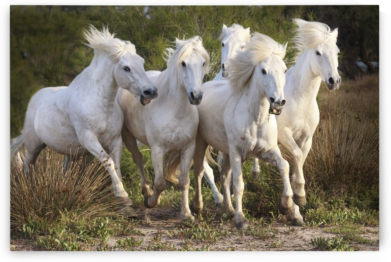 WILD & FREE by Kathy Cline Photography