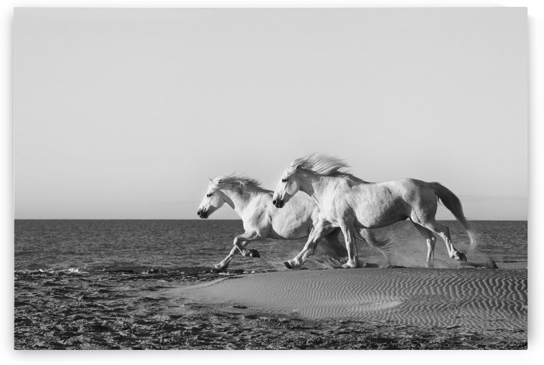 BW Beach Run by Kathy Cline Photography