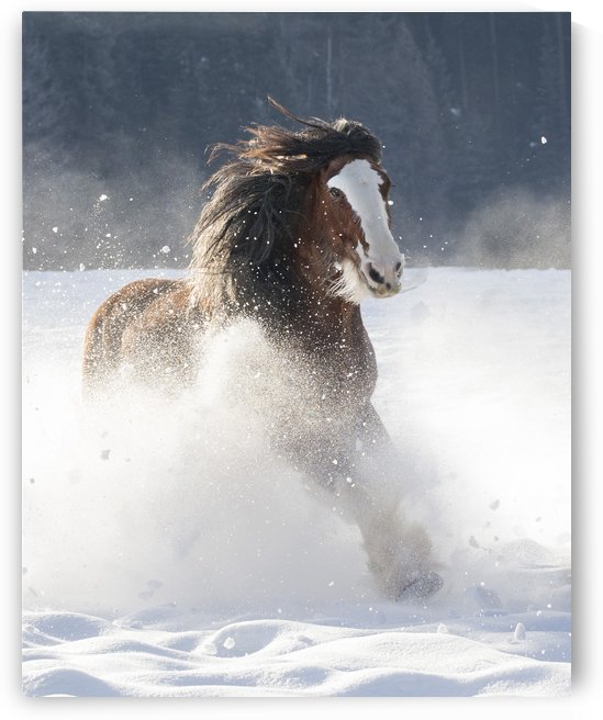 Snow Plow by Kathy Cline Photography