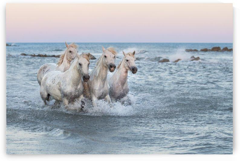 Ocean Run by Kathy Cline Photography