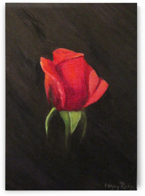 Red Rose by Hayley Boothe