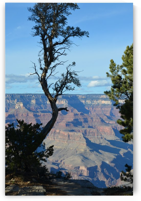 Grand Canyon tree by BK