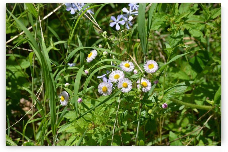 Wild flowers by BK