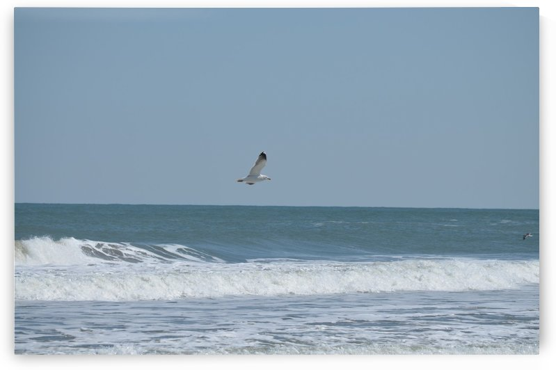 Seagull flying over waves by BK