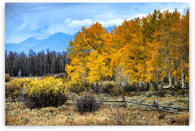 Fall Holdouts in Jackson Hole by Dennis Blum