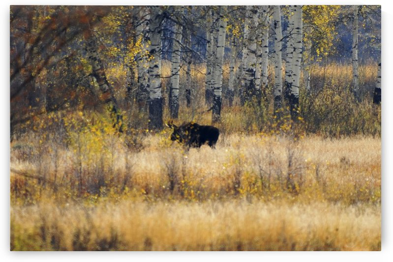 Early light in Gros Ventre by Dennis Blum