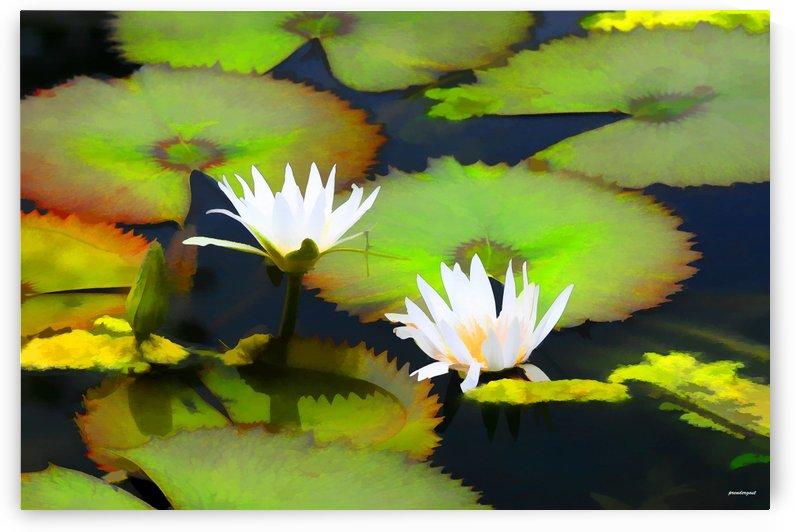 lily pond by tom Prendergast