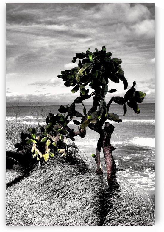 the catus tree by tom Prendergast