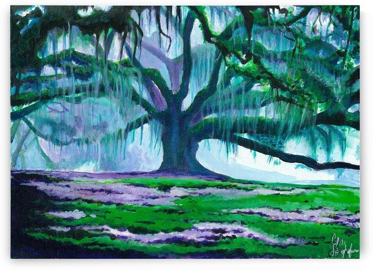 Old Oak by Cameron Jared Langhofer