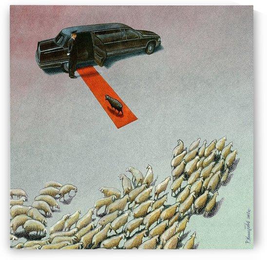 Black Sheep by Pawel Kuczynski