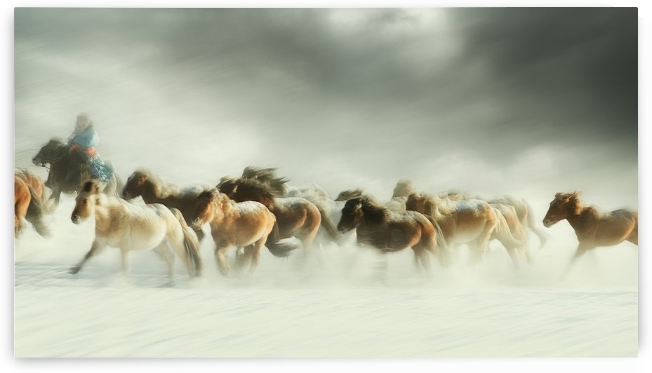 Horses gallop by 1x
