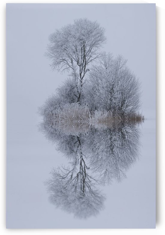 winter stillness by 1x