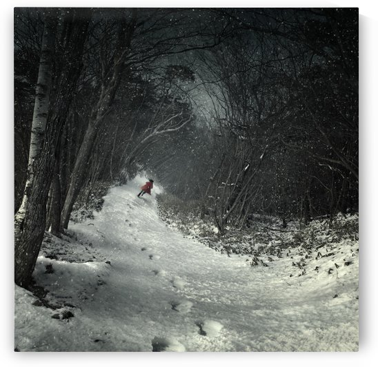 Into the winter forest by 1x