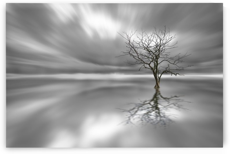 Ghost Tree by 1x