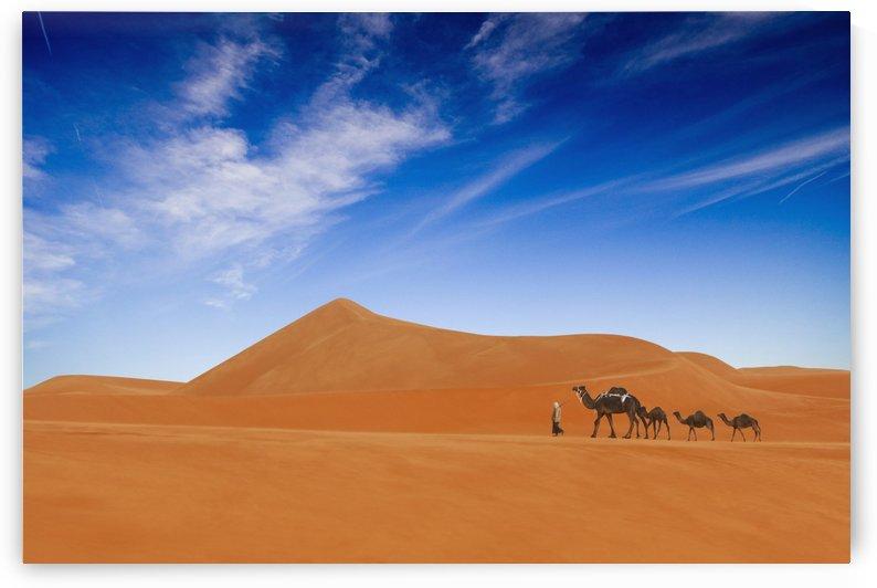 Desert Life .. by 1x