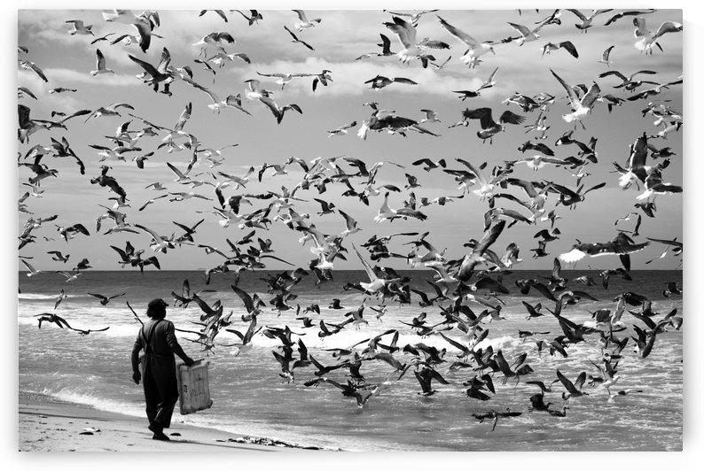 Birds birds by 1x