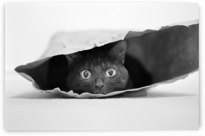 Cat in a bag by 1x