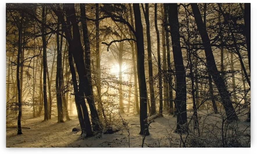 winter morning by 1x