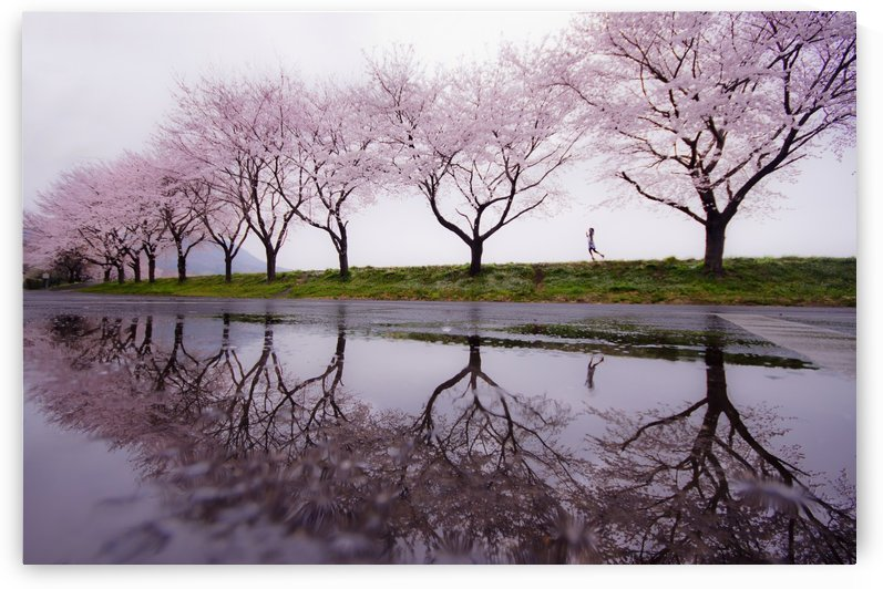 Rain of spring by 1x
