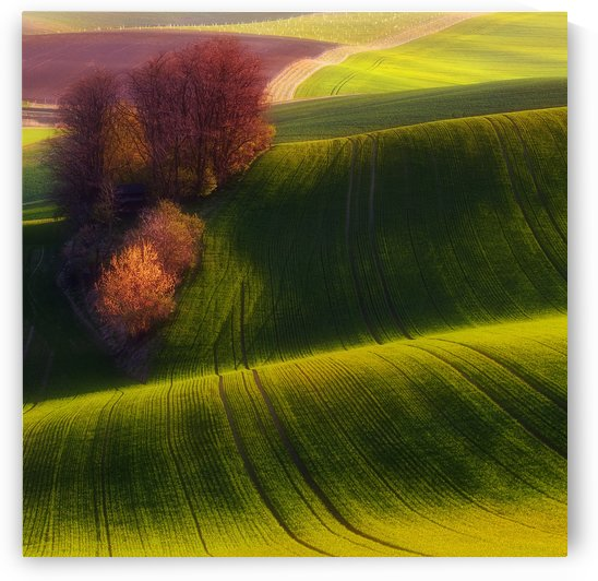 Green fields by 1x