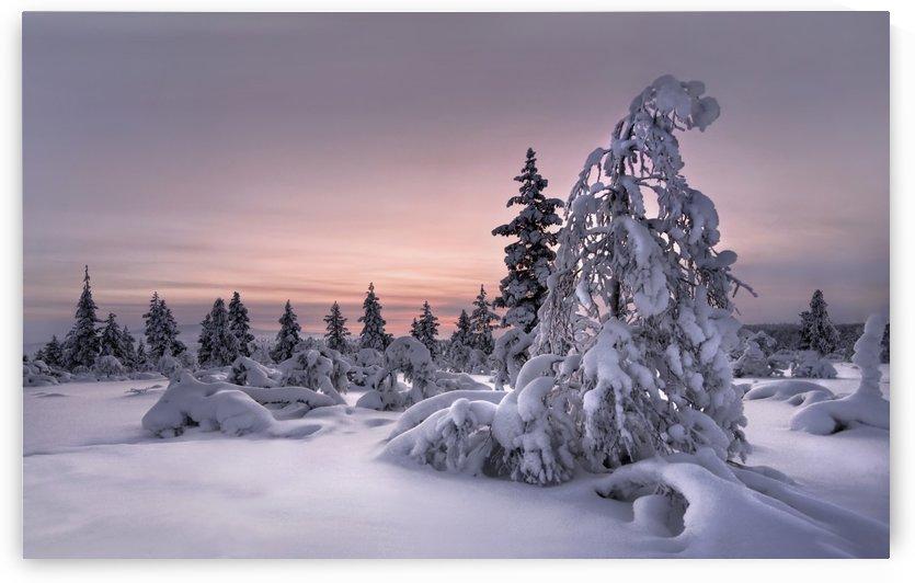Lappland - winterwonderland by 1x