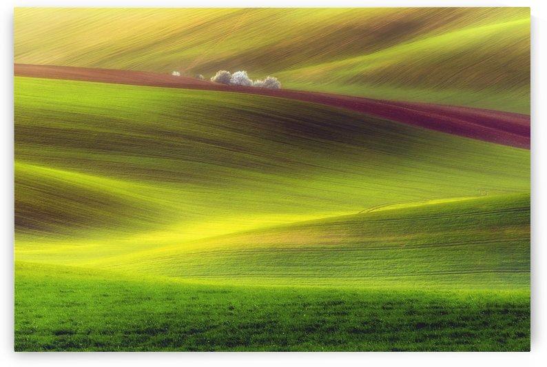 Golden fields by 1x