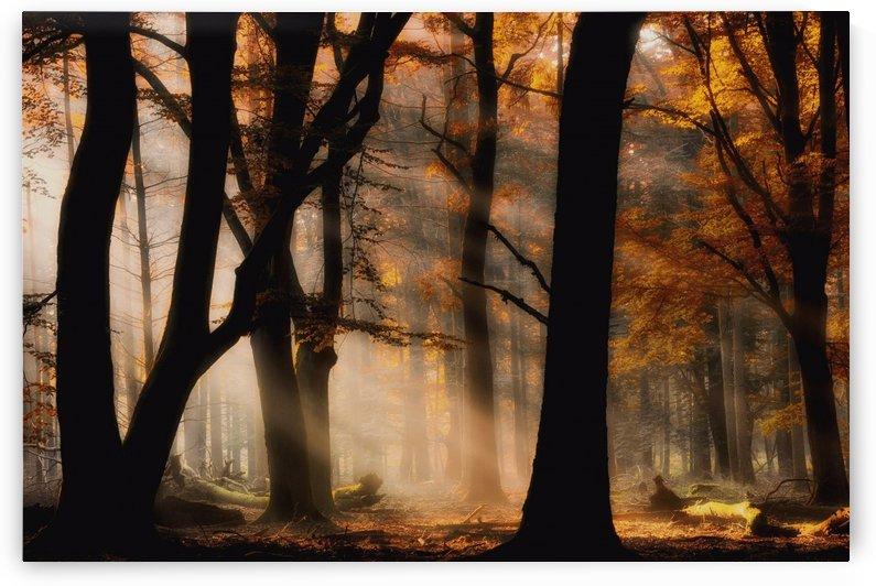 Autumn light by 1x