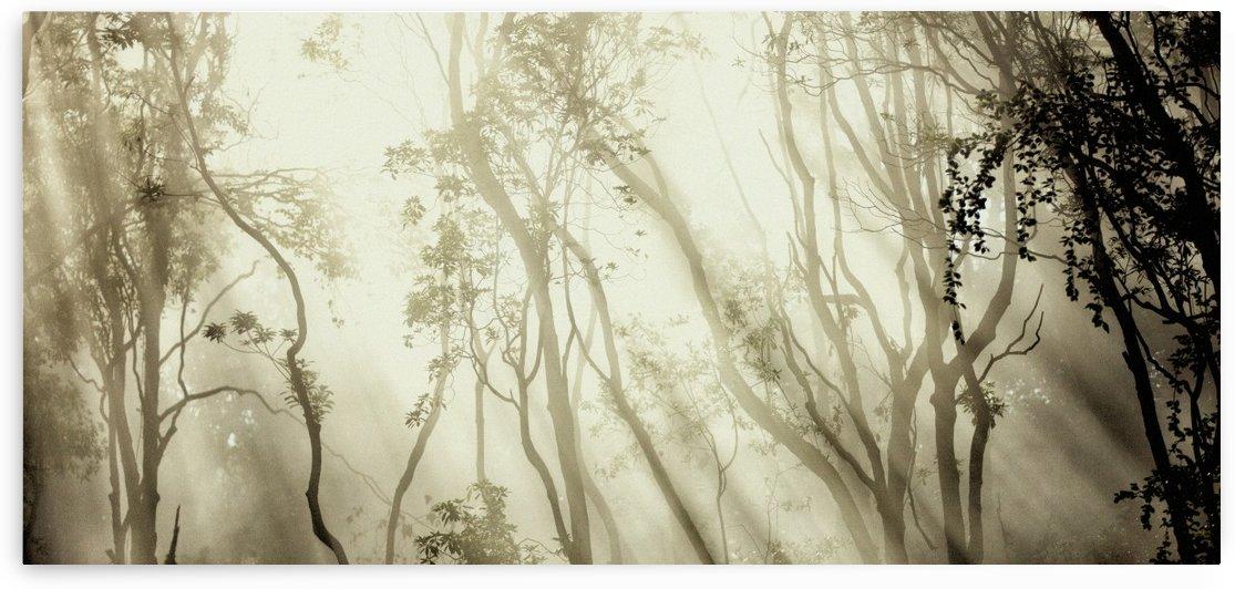 Fog by 1x