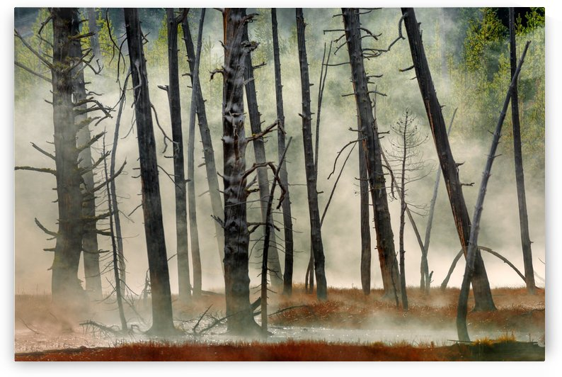 Dead Wood by 1x