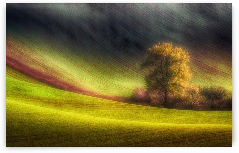 Moravian fields by 1x