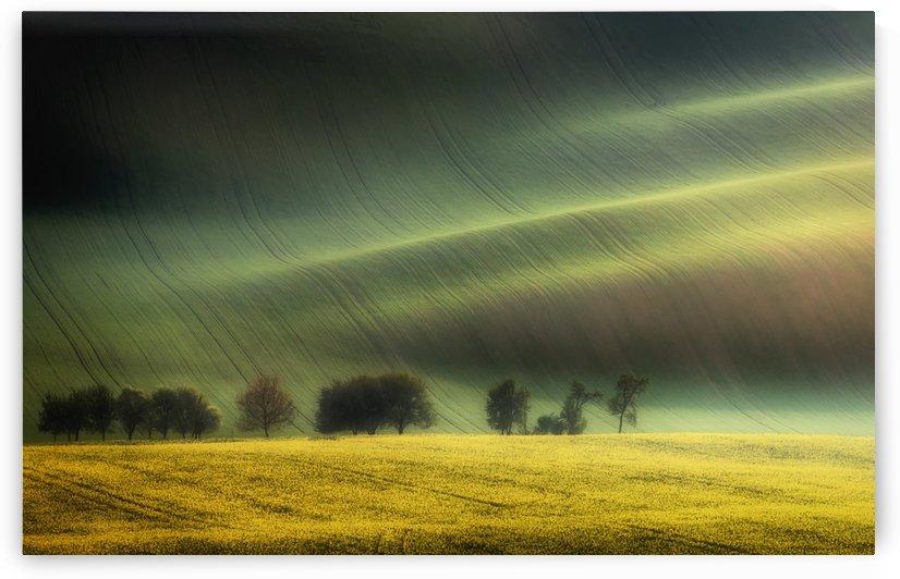 spring fields by 1x