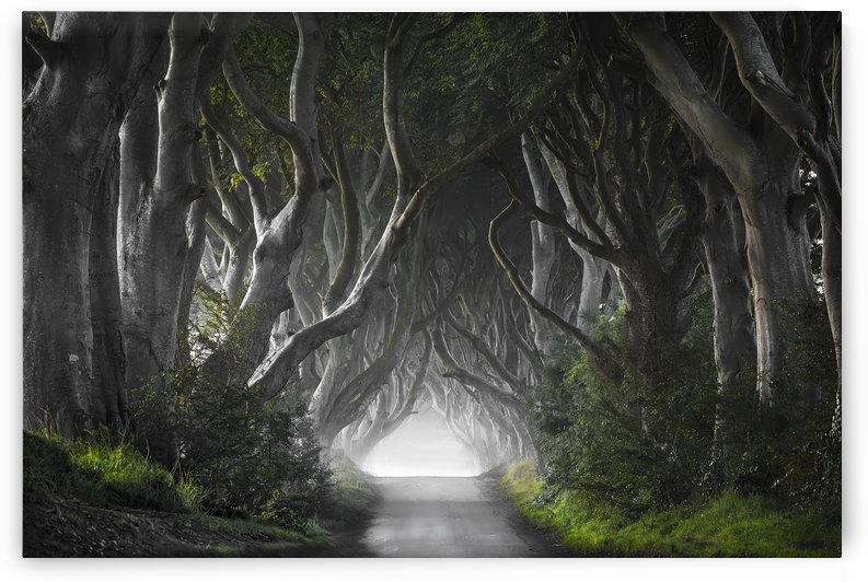 DARK HEDGES by 1x