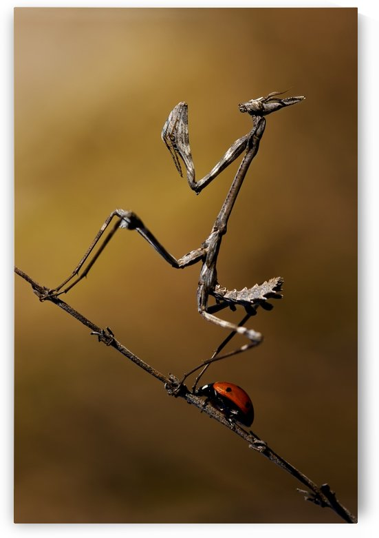 The fable of the ladybug and the empusa by 1x