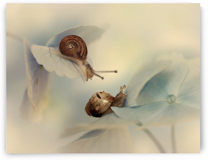 Snails by 1x