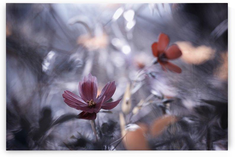 Une autre fleur, une autre histoire by 1x