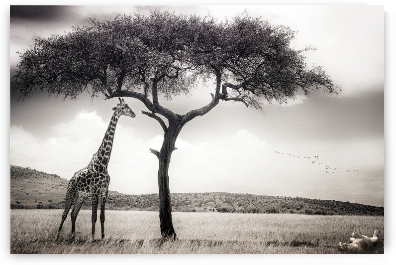 under the African sun by 1x