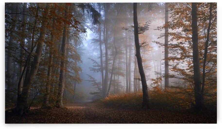 autumn colors by 1x